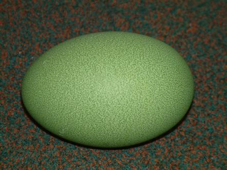 https://rzsszooclub.files.wordpress.com/2011/02/cassowary-egg.jpg?w=444